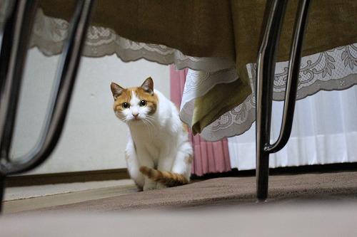 ブログNo.155(獲物を狙う猫)2