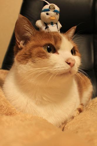 ブログNo.135(ニャフラックと猫)8
