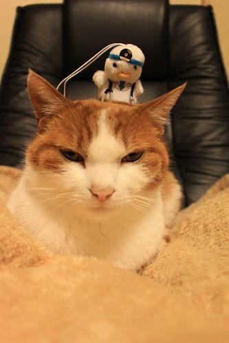 ブログNo.135(ニャフラックと猫」)10