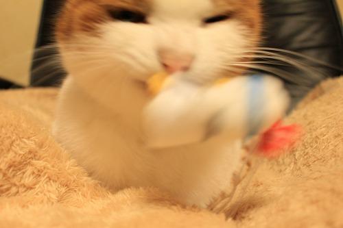 ブログNo.135(ニャフラックと猫)7