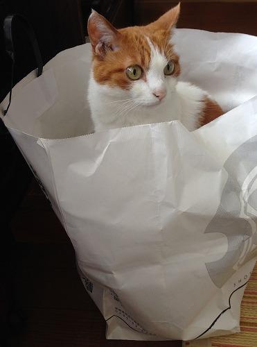 ブログNo.230(猫袋)4