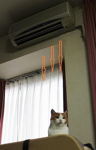 ブログNo.140(暖をとる猫)3