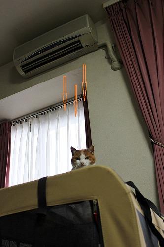 ブログNo.140(暖をとる猫)4