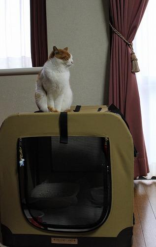 ブログNo.140(暖をとる猫)2