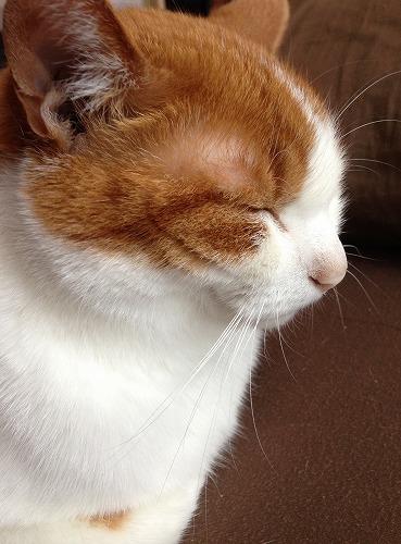 ブログNo.237(ひっつき猫)1