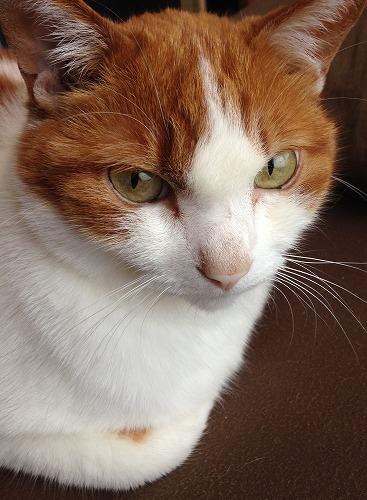 ブログNo.237(ひっつき猫)2