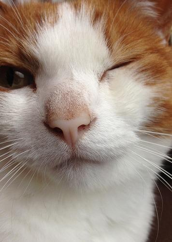 ブログNo.237(ひっつき猫)10