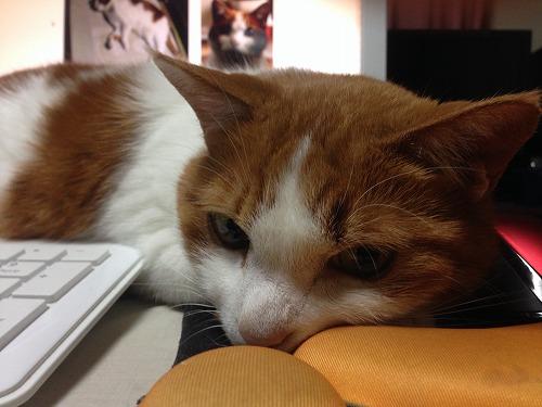 ブログNo.241(ひっつき猫続行中)7