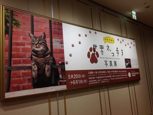 ブログNo.248(世界ネコ歩き写真展)7