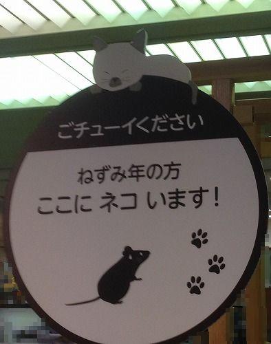 ブログNo.251(世界ネコ歩き写真展&地震)12