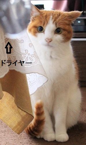 ブログNo.167(怖いけど気になる)7