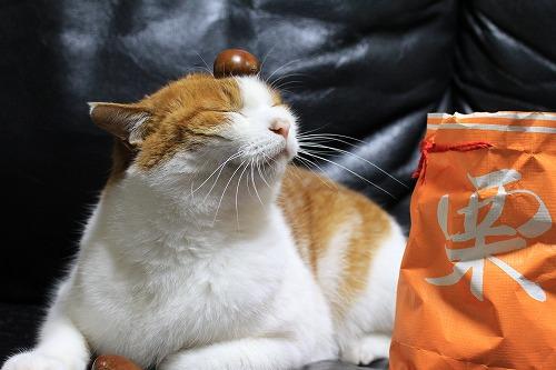 ブログNo.157(猫・ねこ写真展in横浜)5