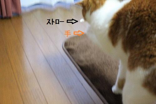 ブログNo.194(遊びに燃える猫)1