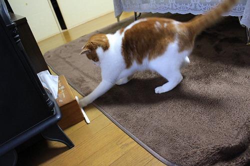 ブログNo.194(遊びに燃える猫)5