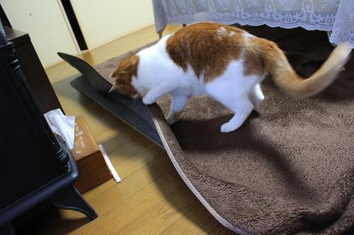 ブログNo.194(遊びに燃える猫)6