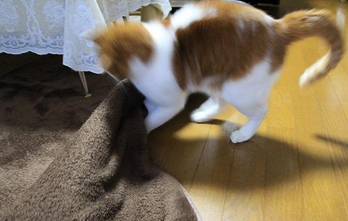 ブログNo.194(遊びに燃える猫)8