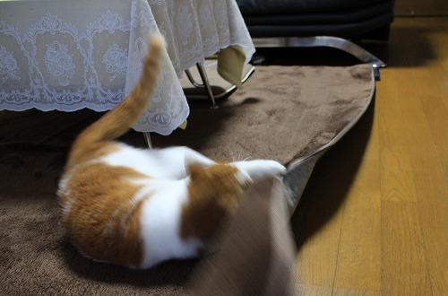 ブログNo.194(遊びに燃える猫)10