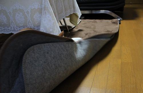 ブログNo.194(遊びに燃える猫)11