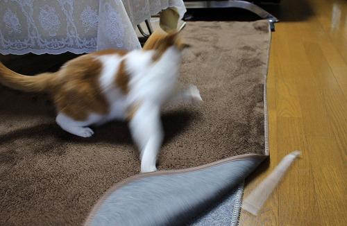 ブログNo.194(遊びに燃える猫)12
