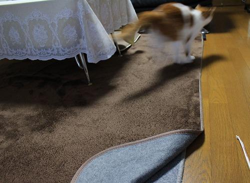 ブログNo.194(遊びに燃える猫)13
