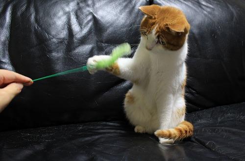 ブログNo.210(猫じゃらし、動と静)1