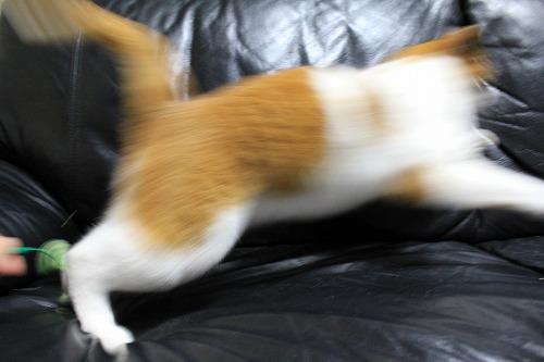 ブログNo.210(猫じゃらし、動と静)3