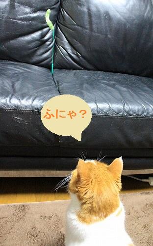 ブログNo.210(猫じゃらし、動と静)5