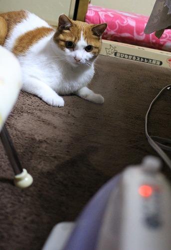 ブログNo.217(アイロンと猫)1