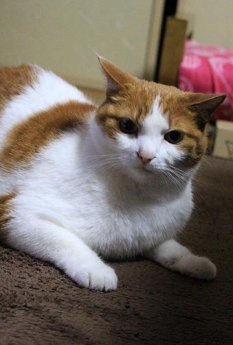 ブログNo.217(アイロンと猫)2