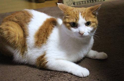 ブログNo.217(アイロンと猫)4