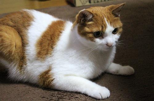 ブログNo.217(アイロンと猫)5