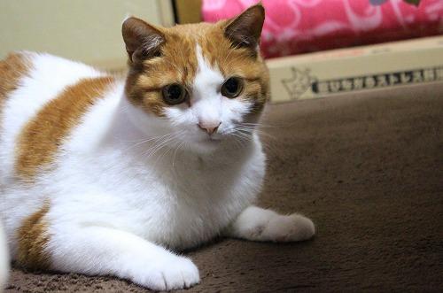 ブログNo.217(アイロンと猫)3