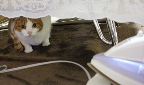ブログNo.217(アイロンと猫)7