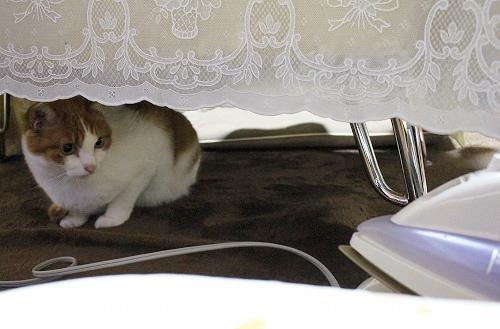 ブログNo.217(アイロンと猫)6
