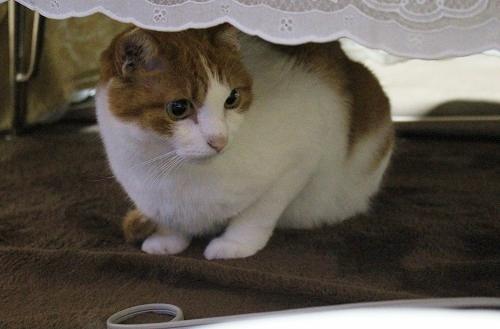 ブログNo.217(アイロンと猫)8