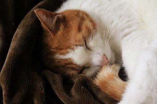 ブログNo.226(久々の猫かまくら)2
