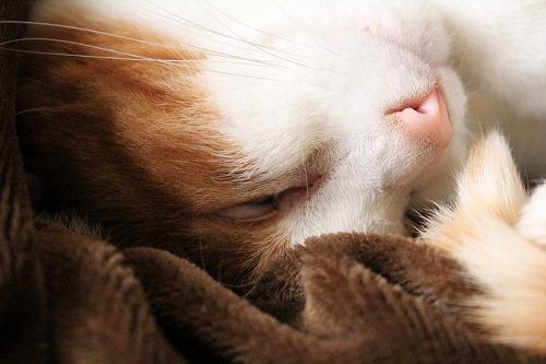 ブログNo.226(久々の猫かまくら)5