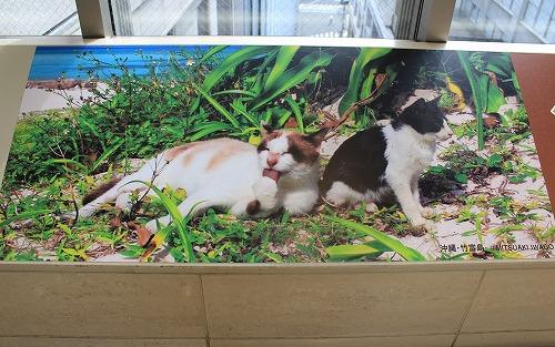 ブログNo.251(世界ネコ歩き写真展&地震)3
