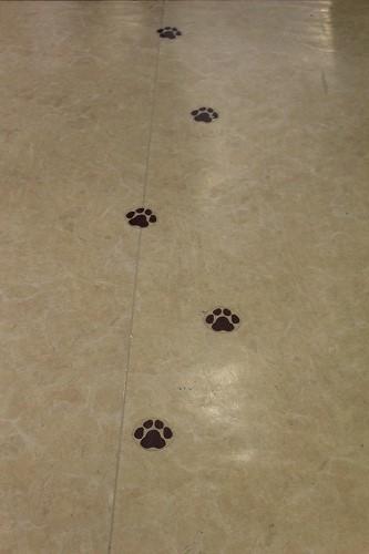 ブログNo.251(世界ネコ歩き写真展&地震)9