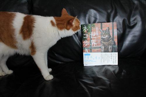 ブログNo.252(世界ネコ歩き写真展グッズ)10