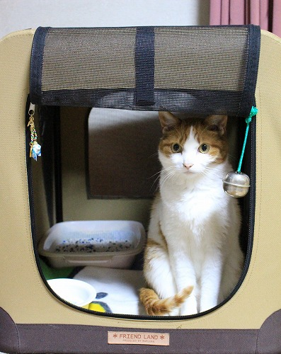 ブログNo.254(置物のような猫)1