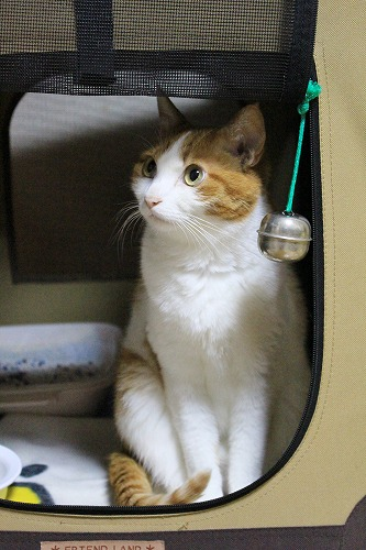 ブログNo.254(置物のような猫)3