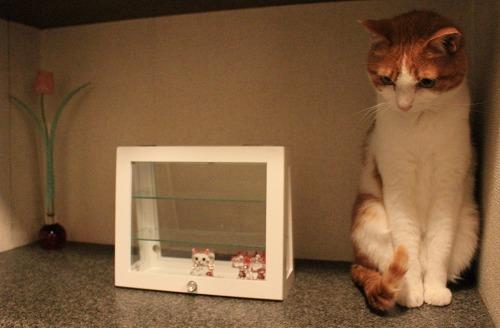 ブログNo.259(ぬいぐるみ猫)1