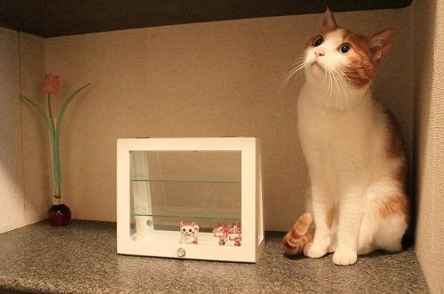 ブログNo.259(ぬいぐるみ猫)2