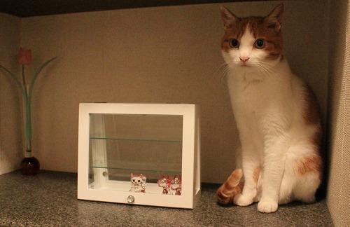 ブログNo.259(ぬいぐるみ猫)3