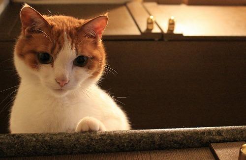 ブログNo.261(ぬいぐるみ猫 続きの続き)5