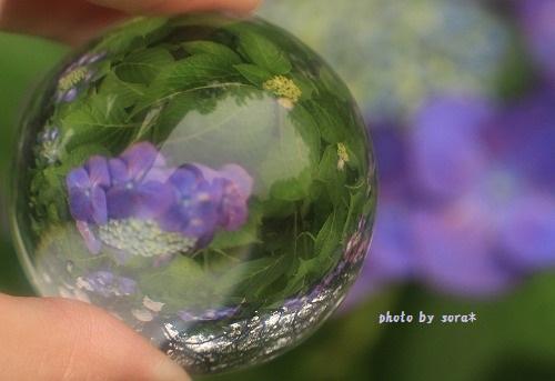 ブログNo.272(考える猫&紫陽花)8