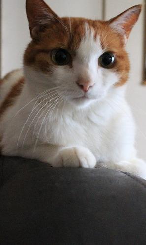 ブログNo.273(素晴らしい職人猫&紫陽花)8