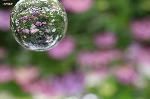 ブログNo.276(お休み(ぬいぐるみ)&紫陽花(終))6