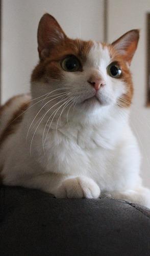 ブログNo.273(素晴らしい職人猫&紫陽花)1